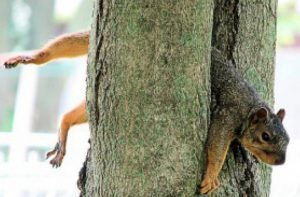 squirrel-stuck-in-a-tree