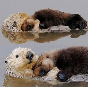 otters_hugging