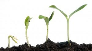 seedling-growing